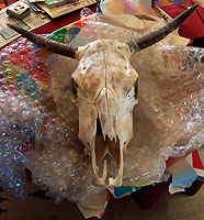 cowskull rules.