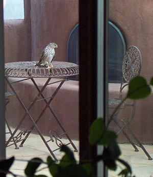 a visitor, at the patio table, yesterday.