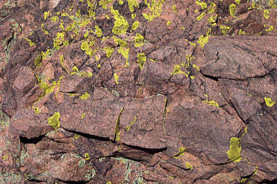 lichens, eldorado wilderness.