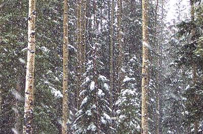 snow, santa fe ski basin.