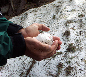 snowball, santa fe national forest, new mexico, june 15, 2003.